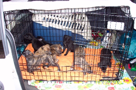 pups in wire crate in our van