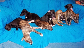 The litter at six weeks